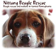 Nittany Beagle Rescue